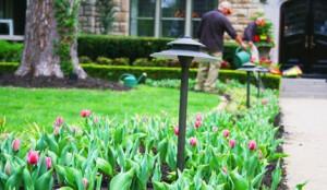 Symphony Designers' Showhouse - Tulips