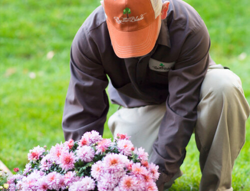 Essential Nutrients For Plants In Gardening