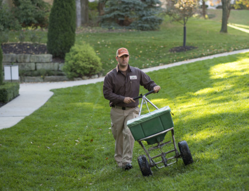 KC Landscaping Company Specializes in Fertilizer Programs