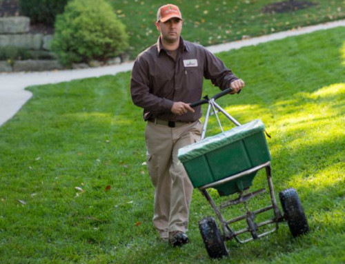 Top 10 Lawn Problems and Solutions
