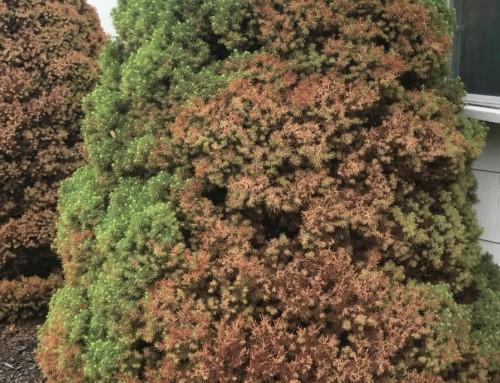 Top Surface, Tree & Shrub Treatments Help to Eradicate Pesky Pests