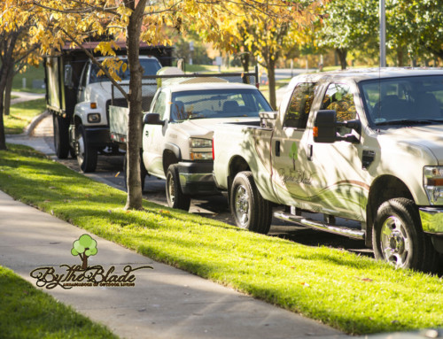 Kansas City Autumn Landscaping – Prepare for the Winter and Thrive in the Spring