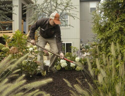 Welcome Spring! Lawn and Landscape Services Now Underway