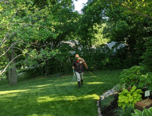 Spring Cleanups Are Vital to Tree and Plant Health